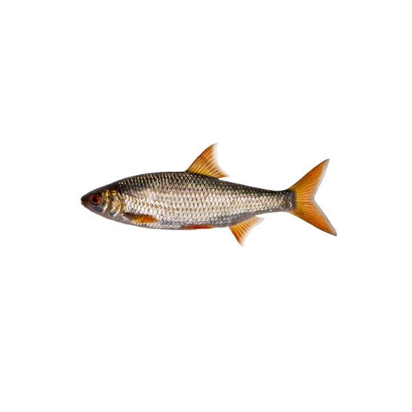 webová stránka pro malé ryby bílý muž online datování