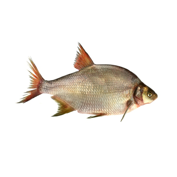 Webové stránky velké ryby